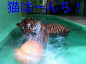 IMG_7864のコピー