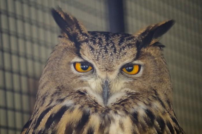 http://www.oouchiyama-zoo.com/wp/wp-content/uploads/2014/05/IMGP0162-700x463.jpg